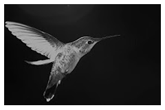 HummingBird Flight Dynamics